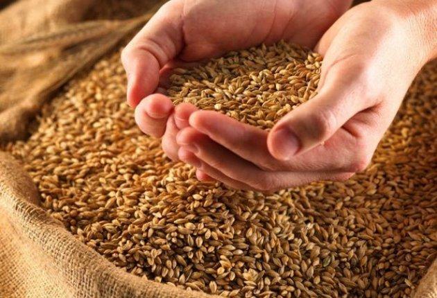 Зерно в Казахстане