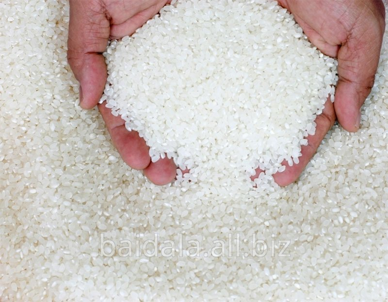 Rice ground, polished wholesale buy in Kyzylorda
