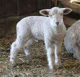 Купить Сельскохозяйственные животные