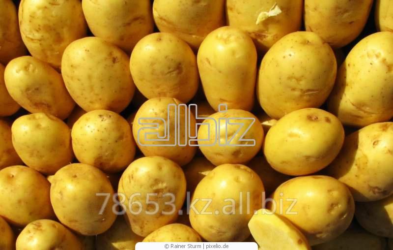 Купить Картофель свежий