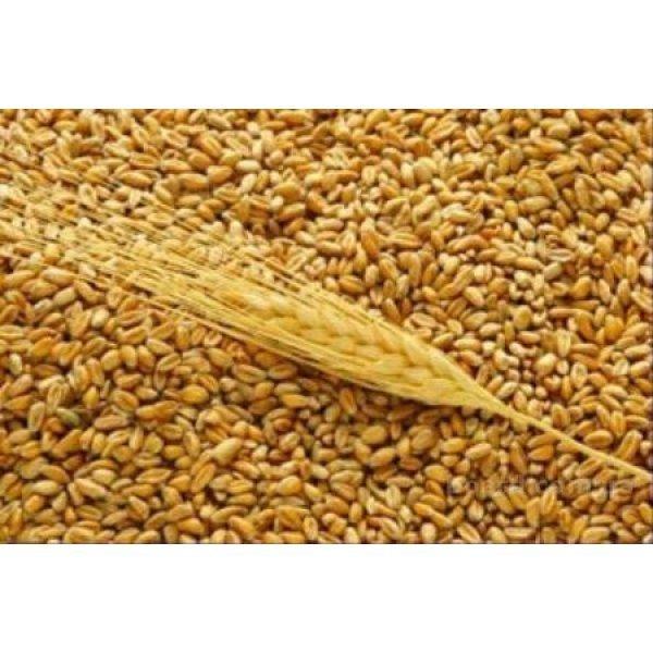 Пшеница экспорт CIF