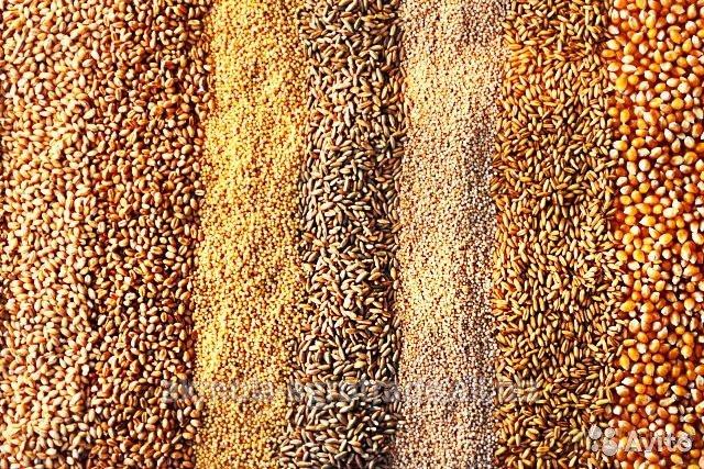 Купить Зерновые на экспорт крупными партиями