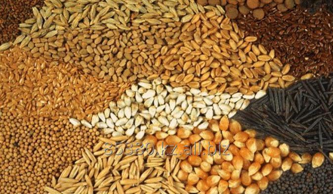 Зерновые культуры Экспорт
