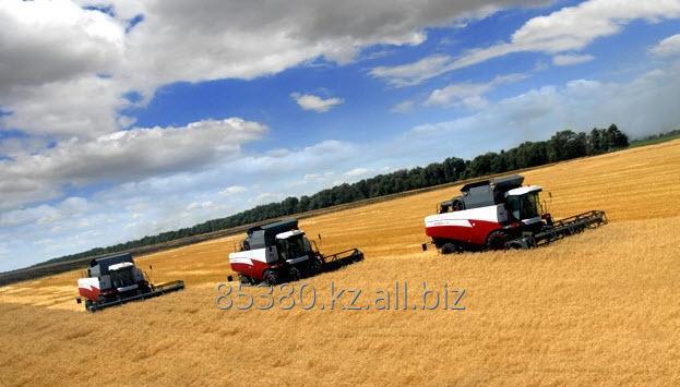 Пшеница фуражная Экспорт от 500тн