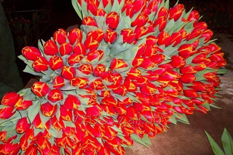 Тюльпаны голандские к 8 марта