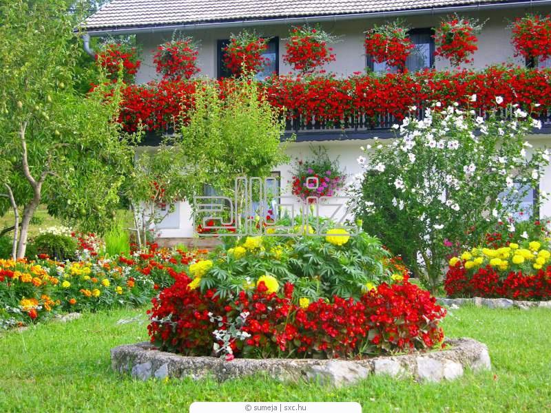 Πολυετή ποώδη φυτά