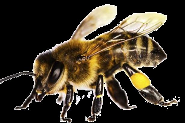 поняли, существует куплю пчелку электро в усть каменогорске стоит