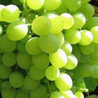 Купить Виноград