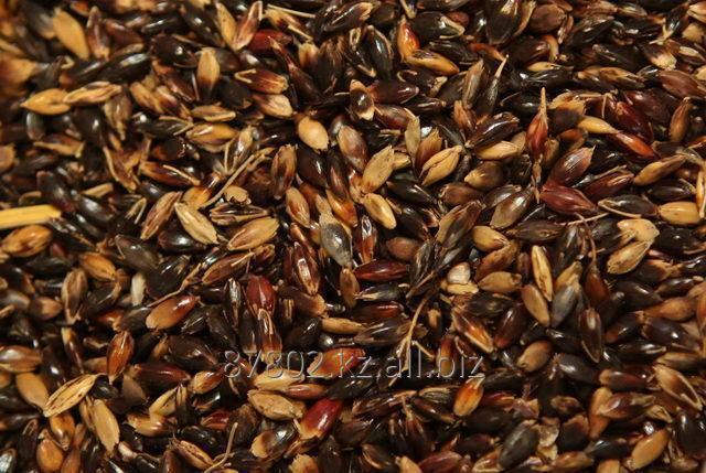 Buy Seeds of annual herbs