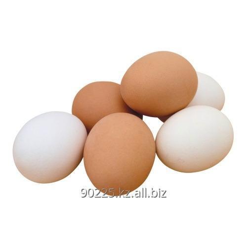 Купить Яйцо инкубационное Домашние