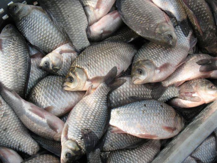 В Казахстане рыбный бум