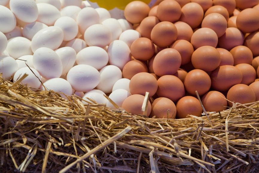 Куриные яйца отборные