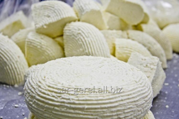 Купить Сыр Заринск Адыгейский Сливочный