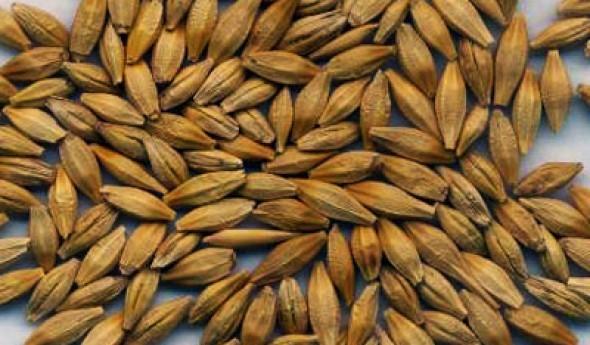 "Семена ячмень - Hakan Agro (Хакан Агро), ТОО ""Eurasia Agro"", TOO ..."