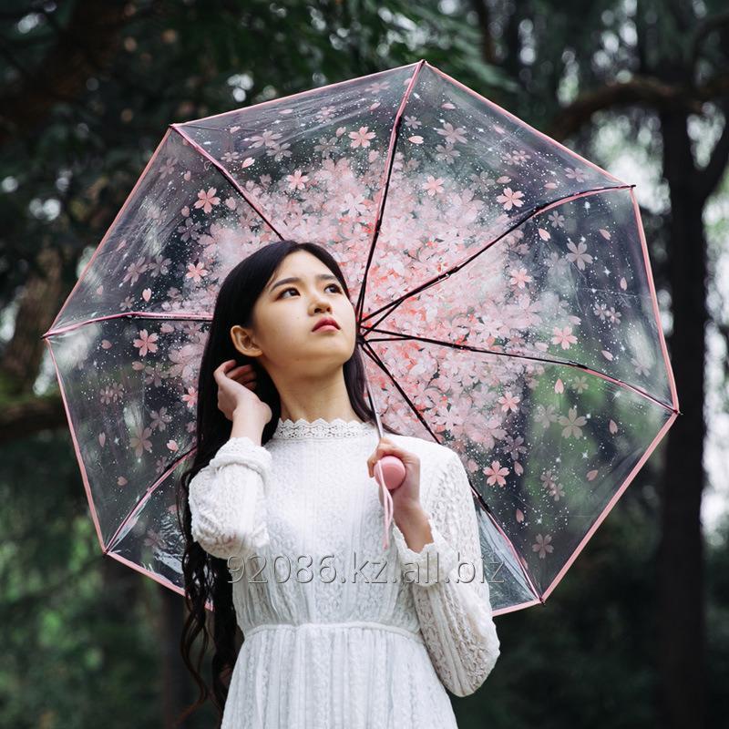 Buy Umbrella cane, Oriental cherry
