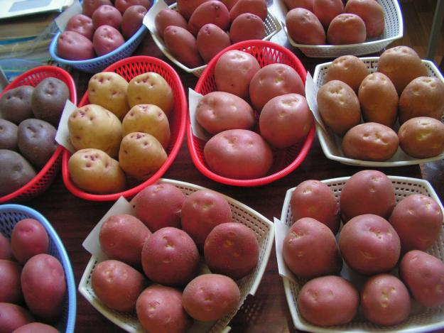 Купить Производим и реализуем семенной картофель