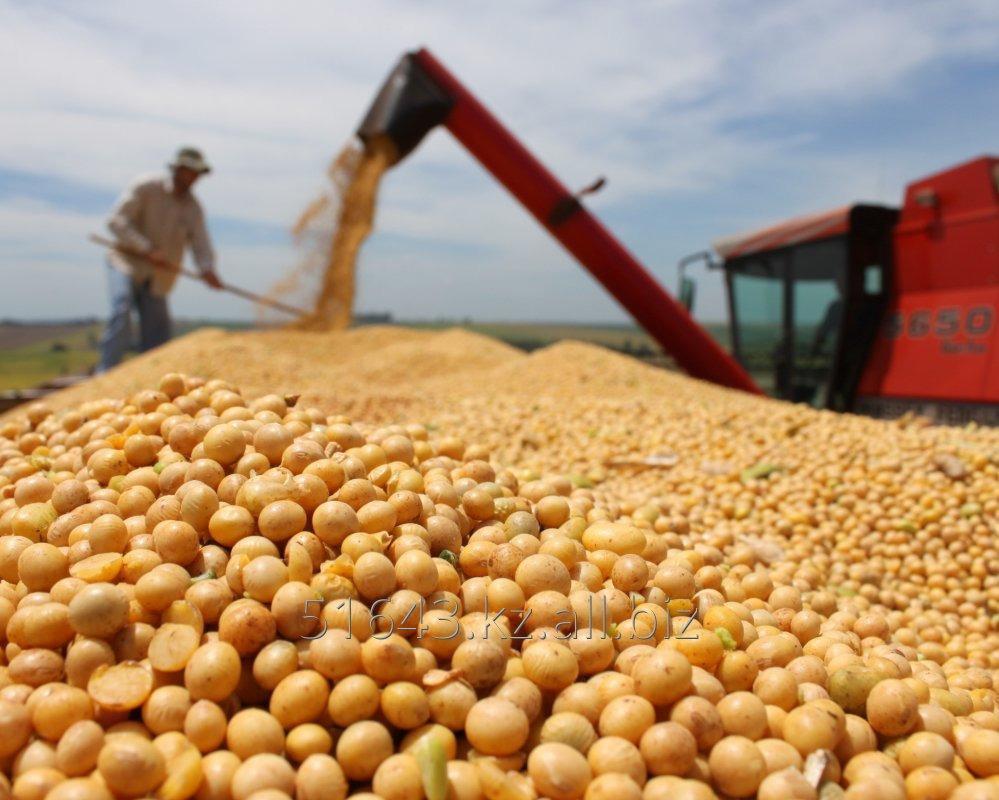Купить Соевые бобы, семена сои (более 1000т)