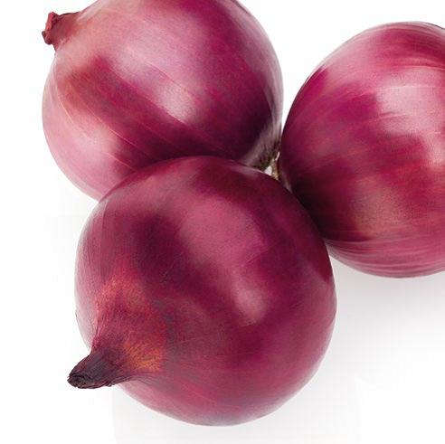 Купить Семена лука EX 07714593 F1
