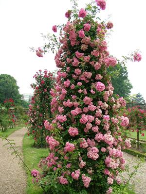 Казахстан розы купить