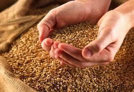 Купить Зерно, Сельское хозяйство