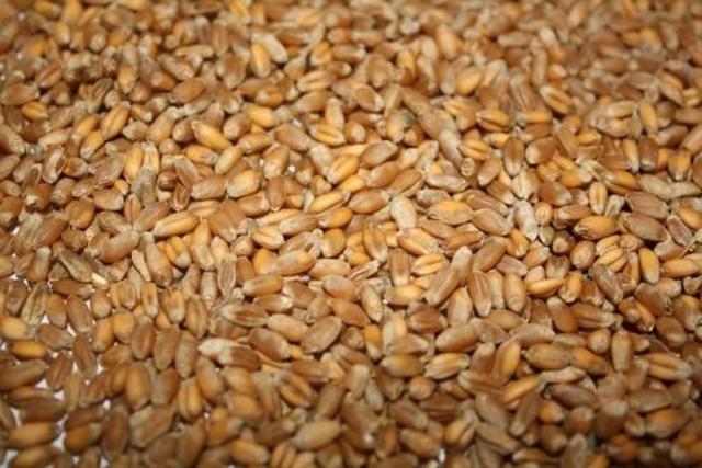 Пшеницы пророщенная, солодовый, полынный запах.