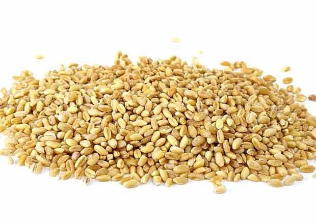 Barley from Kazakhstan