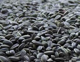 Купить Подсолнечник масличный 40%