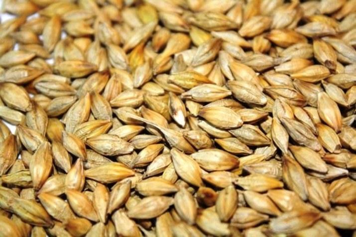 Ячмень, зерно, закупка, продажа, Костанай, ТОО Муган