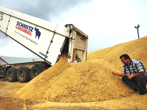 Wheat for export, Kazakhstan