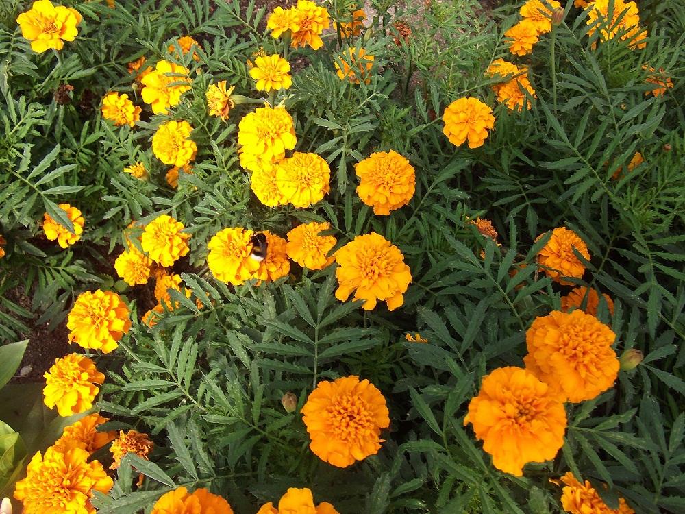 Купить Рассада декоративных растений