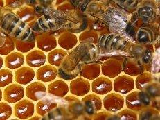 Купить Мёд из степного разнотравья