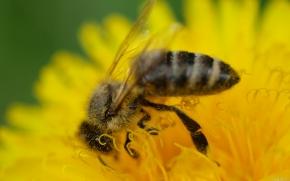 Купить Продукция пчеловодства