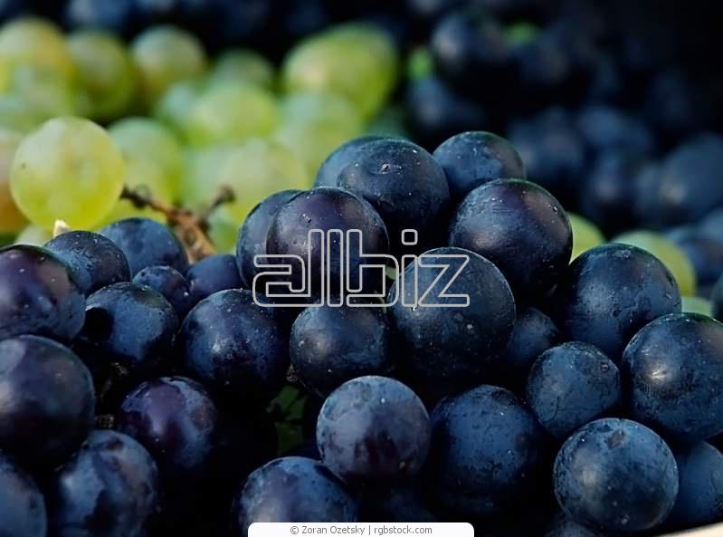 Купить Виноград столовый