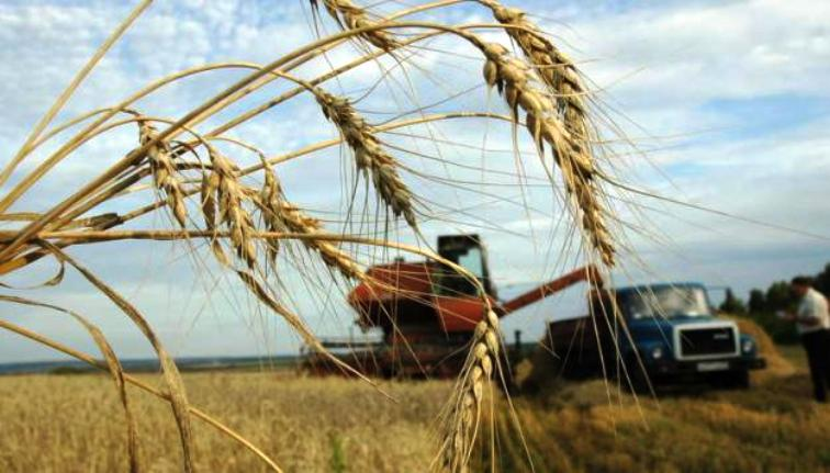 Пшеница на экспорт, Казахстан, Опт