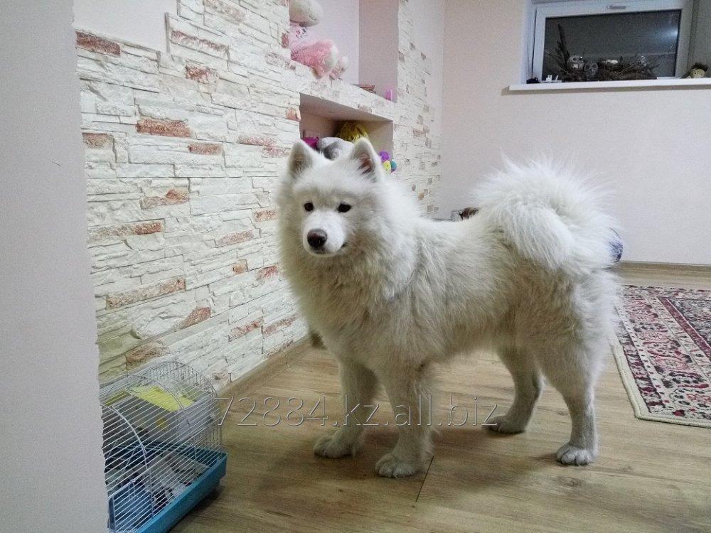 Купить Гостиница для собак happydogs.kz