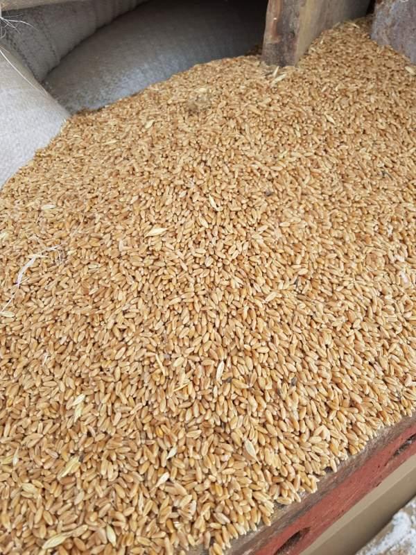 Купить Пшеница 3 4 5 класс