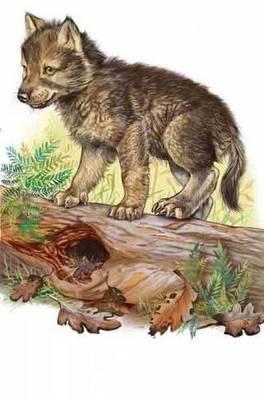 Купить Сказки детские, смелый волчонок