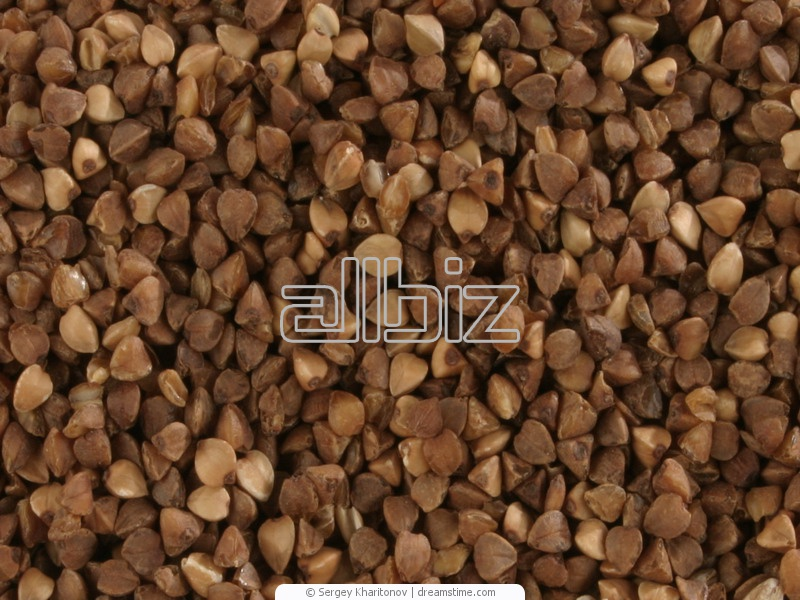 Buckwheat wholesale, Buckwheat edible, Grain, bean and groat crops, Agriculture