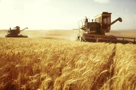 Wheat. Export from Kazakhstan