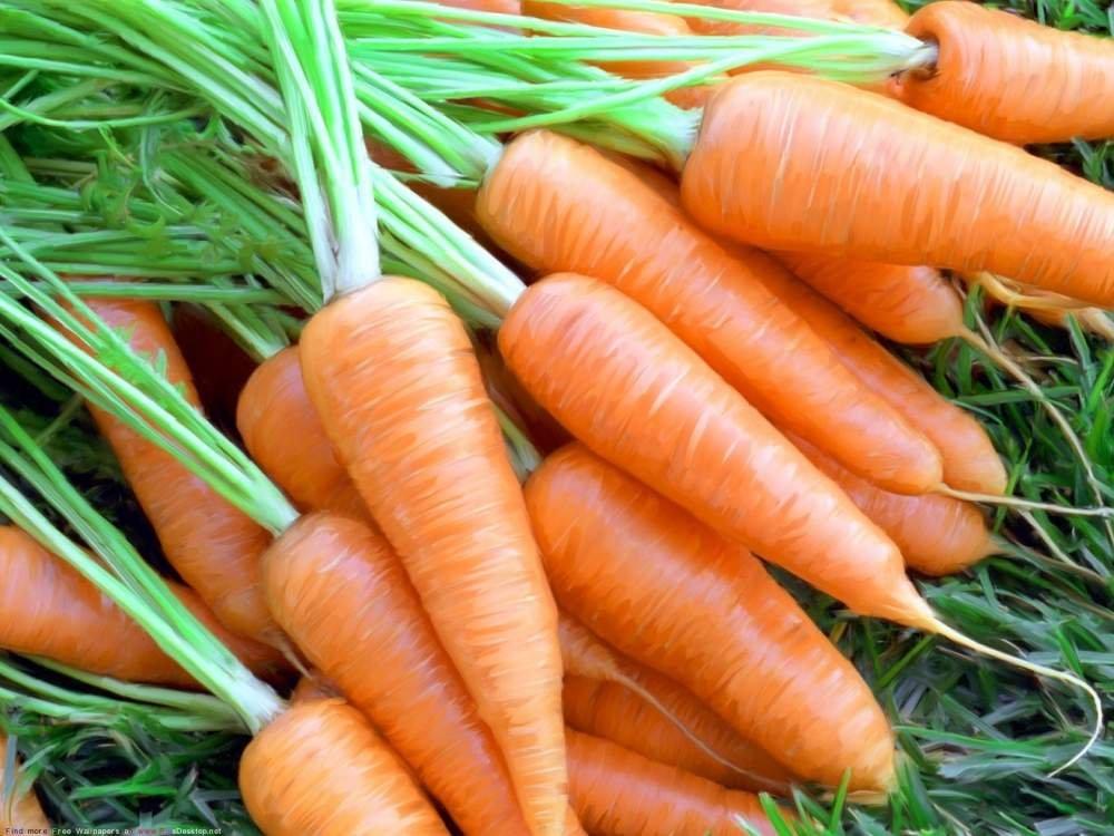 Купить Морковь (шантане роял)