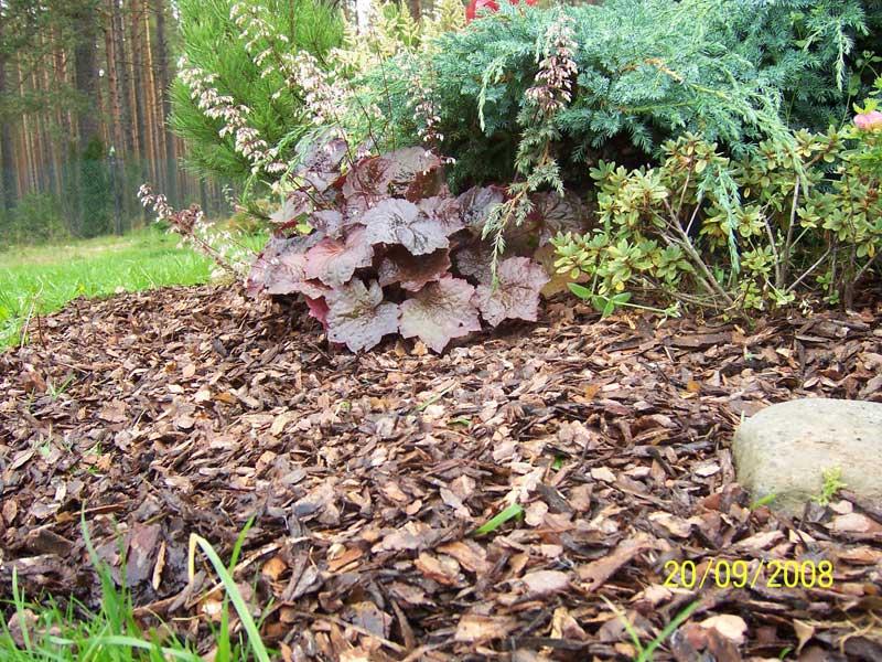 Buy Bark pine, mulch, 85 l.