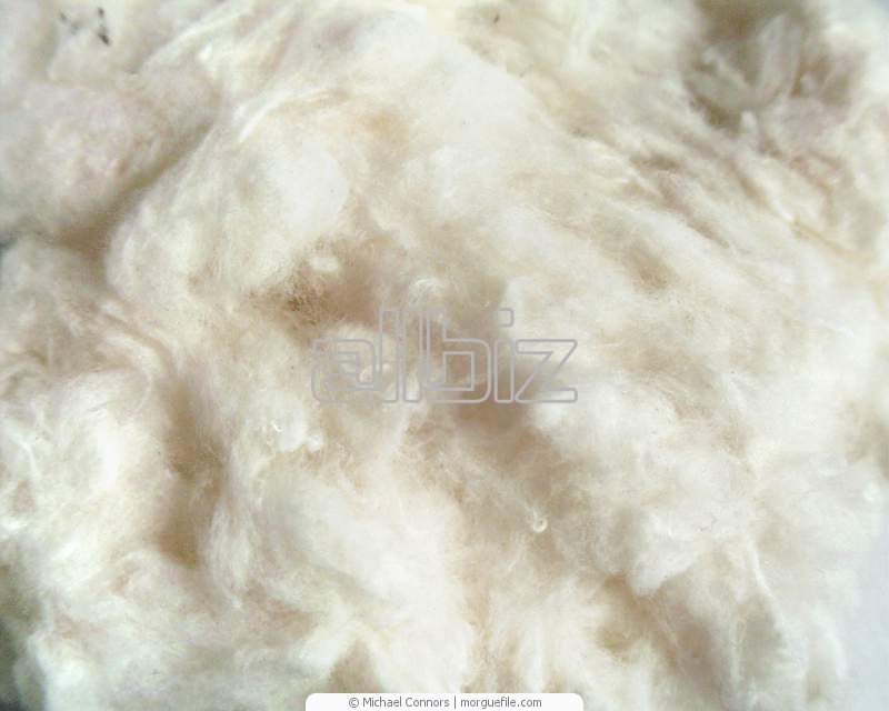 Buy Cotton wool