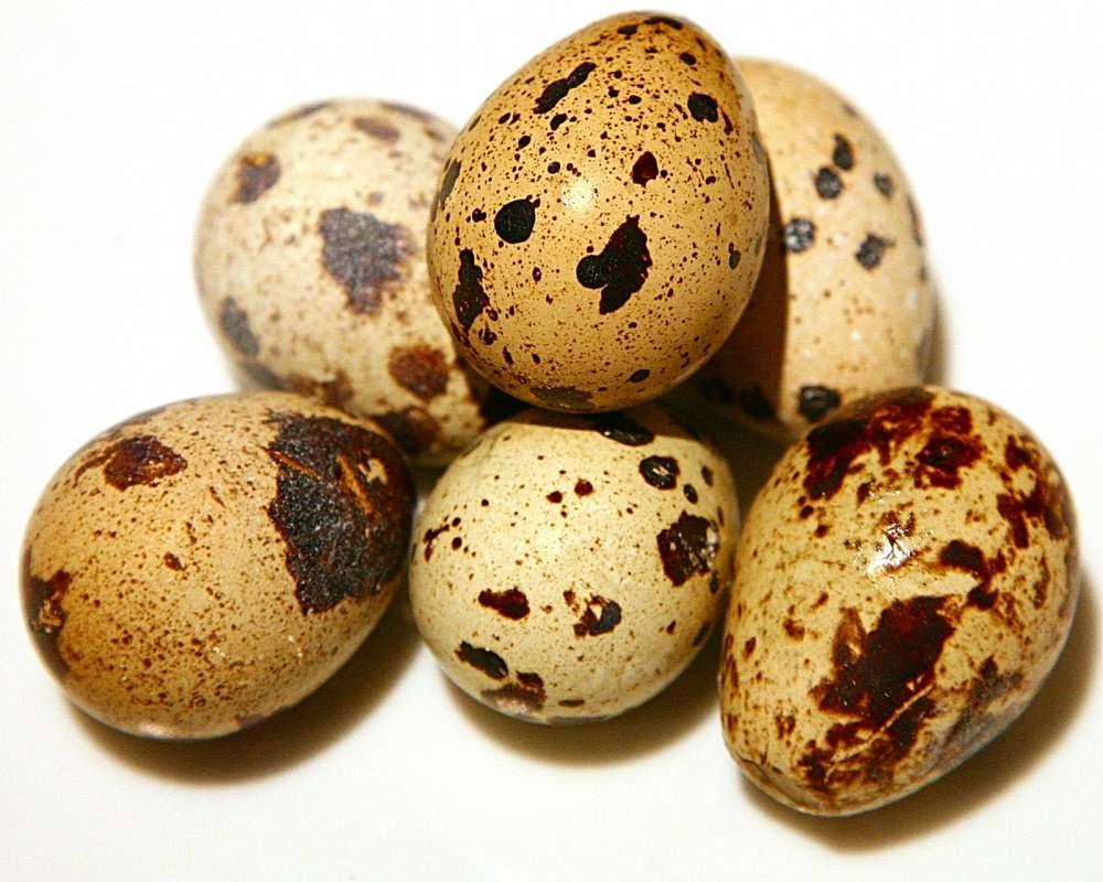 Купить Яйцо перепелиное