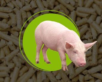 Купить Корма для свиней - Матки холостые и первых 2/3 супоросности СКК 53