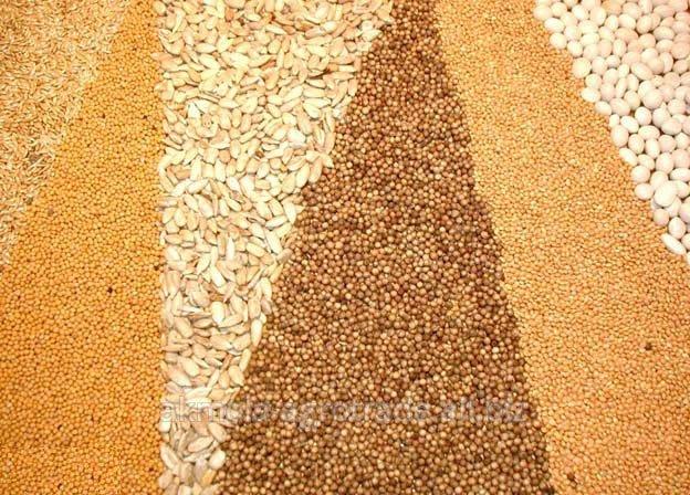 Купить Зерно фуражное Акмолинская область