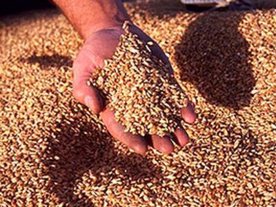 Пшеница твердая. Экспорт из Казахстана
