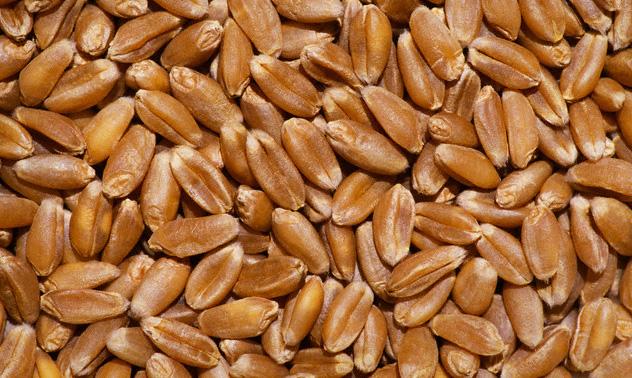 Пшеница мягкая. Экспорт из Казахстана