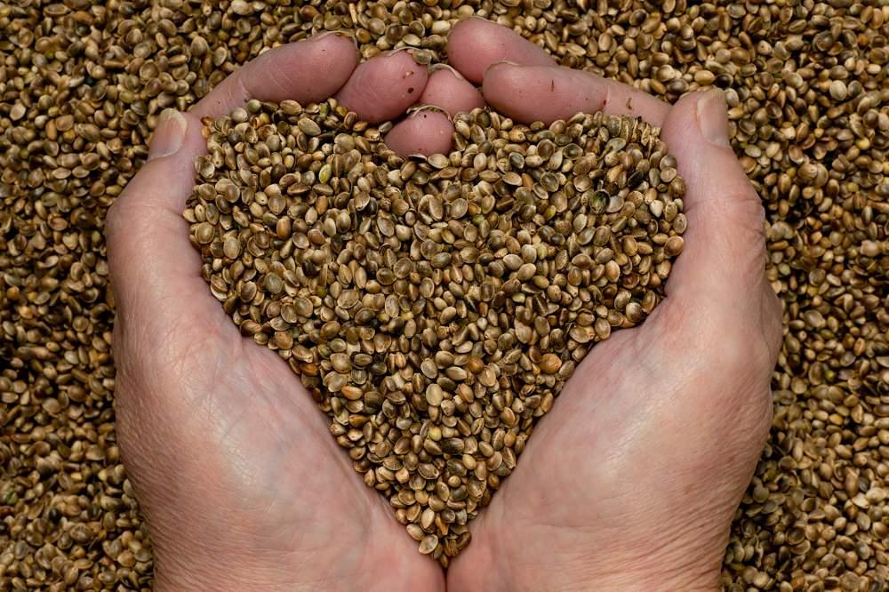 Buy Elite and seed-growing economy of Karaba