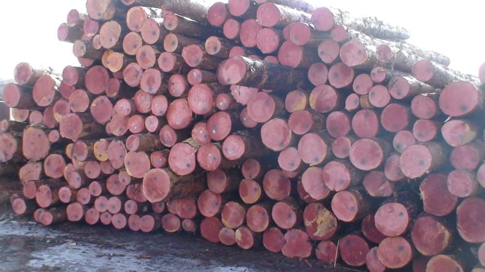 购买松树原木, 价格 ,