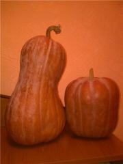 Pumpkin mantny